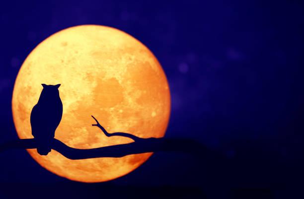 Full moon in the night sky picture id979005716?b=1&k=6&m=979005716&s=612x612&w=0&h=4hlglc06qantibj k4nfohnvqtctuvuc9x8ry4vq8mw=