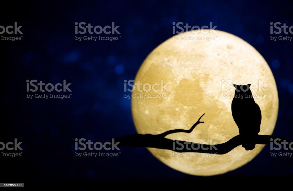Pleine lune dans le ciel nocturne photo libre de droits