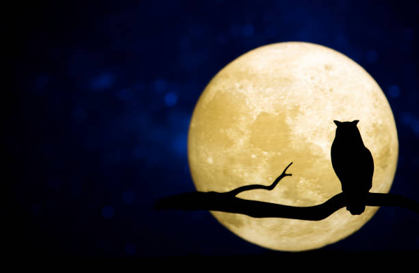 full moon in the night sky - owl stock photos and pictures