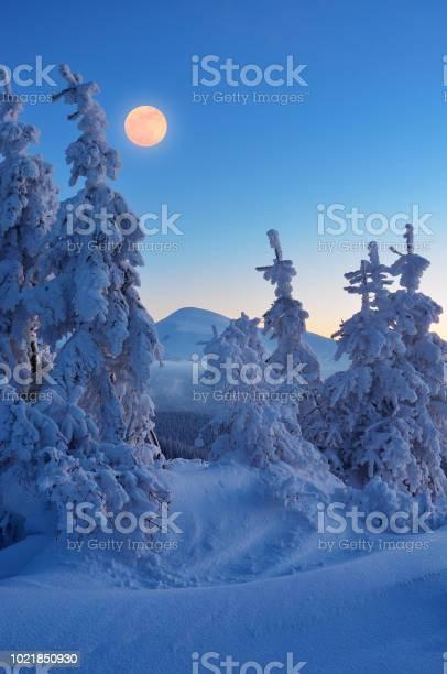 Photo of Full moon in winter