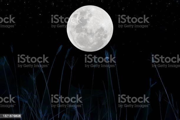 Photo of Full moon on the sky with flowers grass silhouette at night.