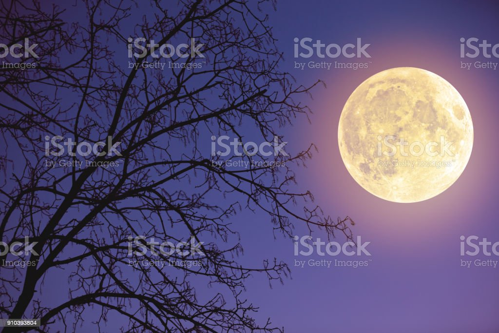 Full Moon rising from the horizon with tree silhouettes and stars. My astronomy work. stock photo