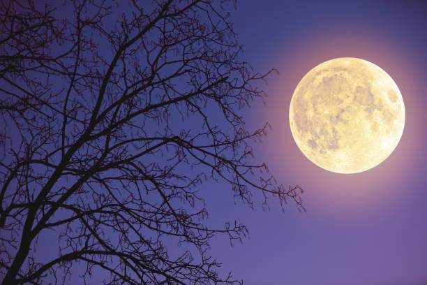Full Moon rising aus dem Horizont mit Baum Silhouetten und Sternen. Meine Astronomie-Arbeit. – Foto