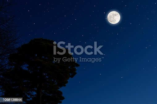Full moon rising over the pine tree with copy space, and lots of stars.