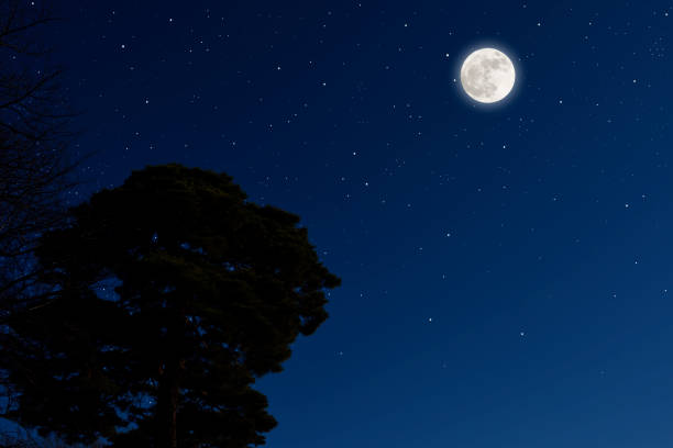 full moon rising over the pine tree, and lots of stars. - moon stock photos and pictures