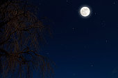 Full moon rising over the willow tree with copy space, and lots of stars.