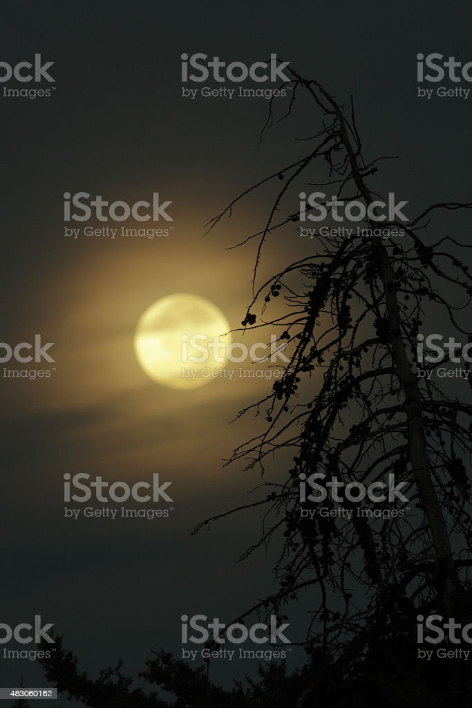 Full Moon Supermoon Fog Silhouette Tree stock photo