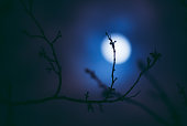 Full moon out of focus seen through a dry branch in winter. Ideal for spooky horror Halloween projects.