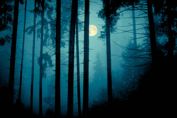 full moon through the spruce trees in magic mystery night forest. halloween backdrop. - trees in mist stock pictures, royalty-free photos & images