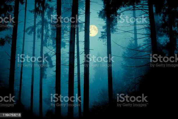 Photo of Full moon through the spruce trees in magic mystery night forest. Halloween backdrop.
