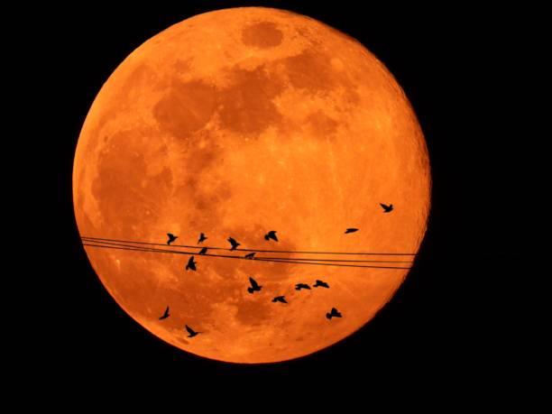 Full moon with silhouette picture id1143790643?b=1&k=6&m=1143790643&s=612x612&w=0&h=ujmnei8qanmj74vkzo6p9bwgpd4bqgaekdpru6c7qe4=