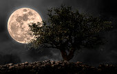 Full moon with tree in night.