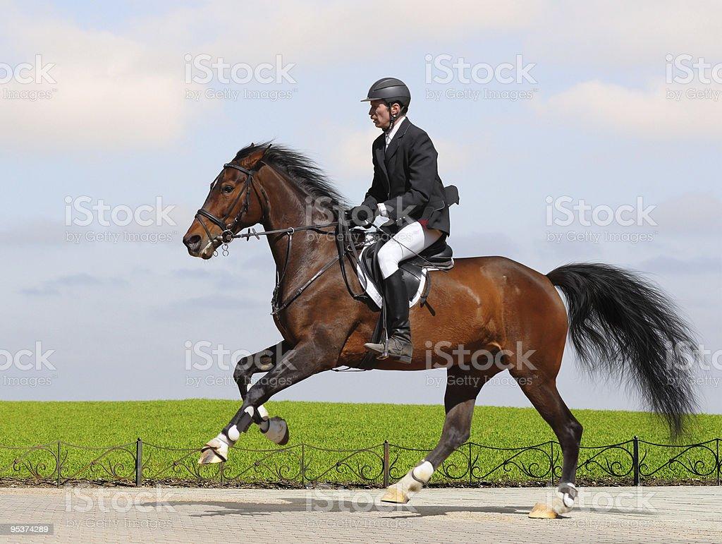 Full speed gallop stock photo