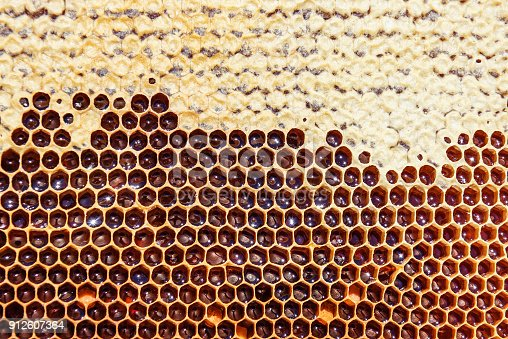 istock full sweet honeycomb texture 912607364