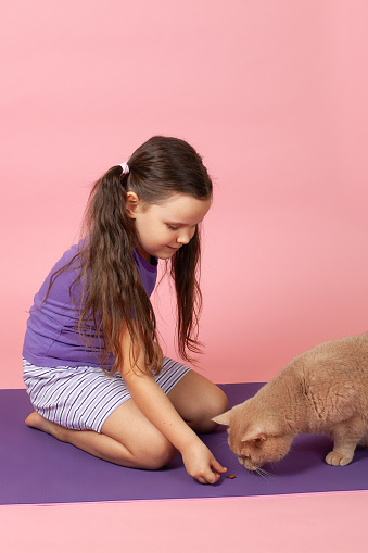 full-length portrait of girl with ponytails in purple T-shirt and shorts feeding a pad of dry food to a red British cat, isolated on a pink background