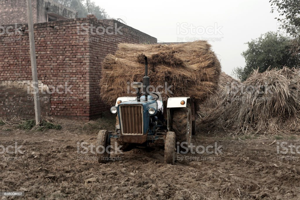 Fully loaded trolley with dry straws stock photo