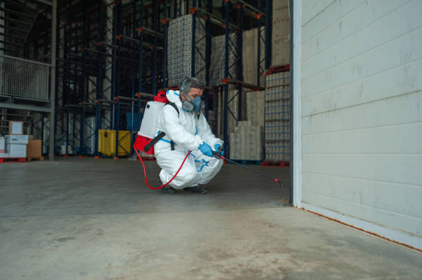 Fumigator sanitizing, cleaning and disinfection. Coronavirus pandemic professional control. stock photo