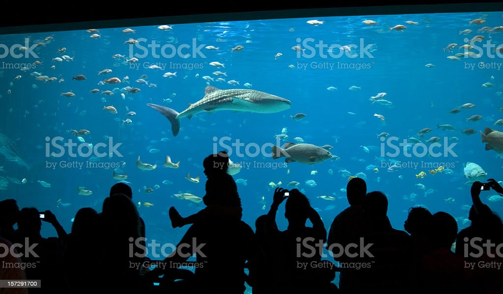 Fun at the aquarium stock photo