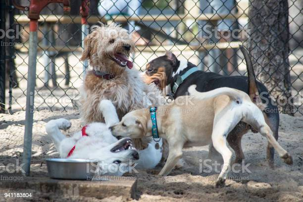 Fun at the dog park picture id941183804?b=1&k=6&m=941183804&s=612x612&h= du8hiq b9mrox3znczjujfc7nhbfmgl0fc73g4ta4q=