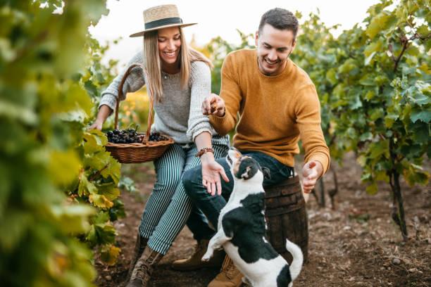 Fun at vineyard stock photo
