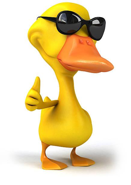 Fun duck picture id530691767?b=1&k=6&m=530691767&s=612x612&w=0&h=mjuidtfwhrctnrtd8zb7srg54fm afuhouilqs 09eu=