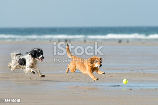 Two dogs playing with a ball on the beach