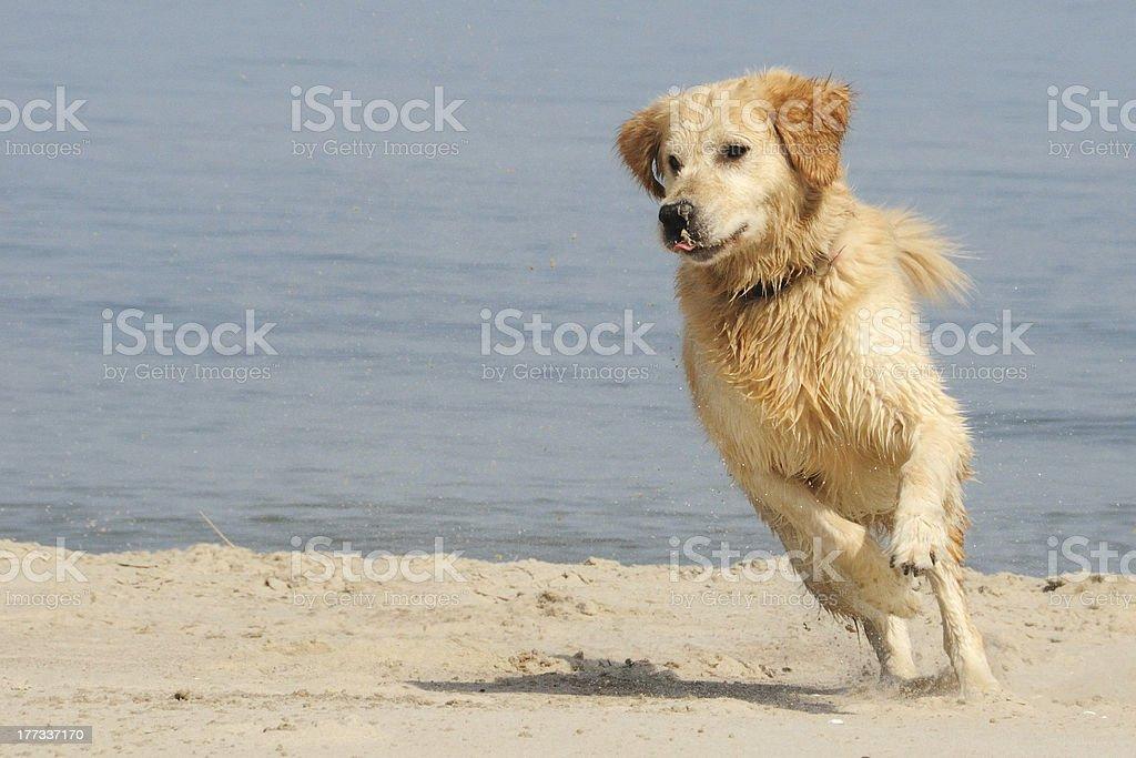 Fun on the sand royalty-free stock photo