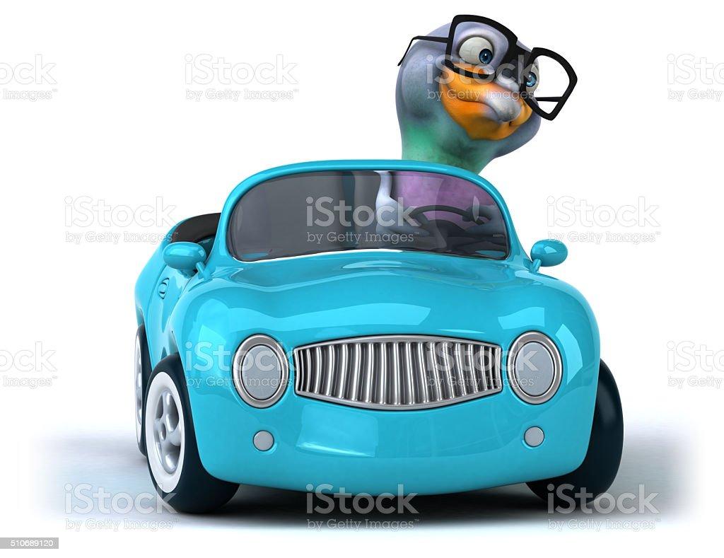 Fun pigeon – Foto