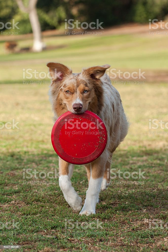 Fun toy at dog park stock photo