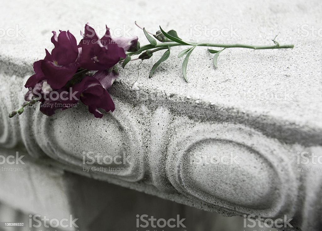 funeral flower royalty-free stock photo