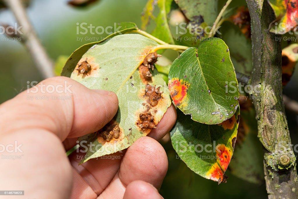fungal attack stock photo