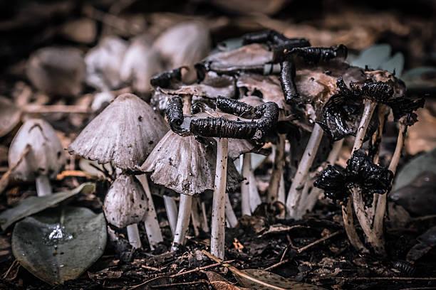 Pilze-Wald – Foto
