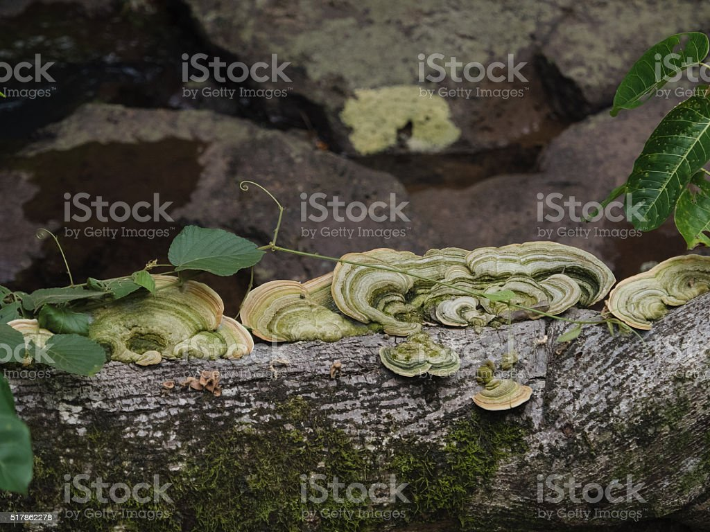 Fungi growth on dead tree stock photo