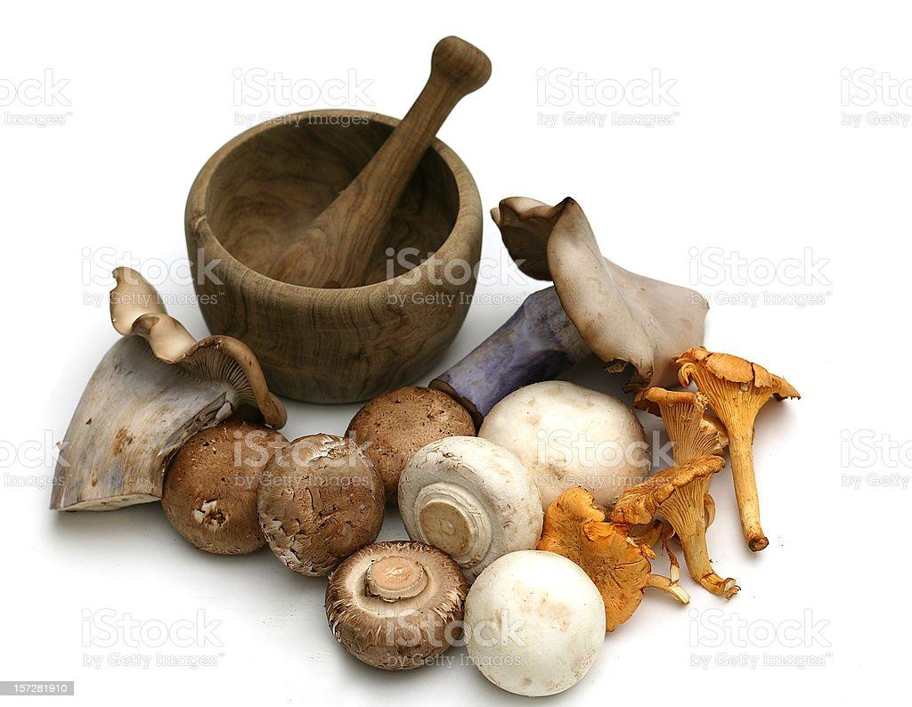 Fungi isolated stock photo