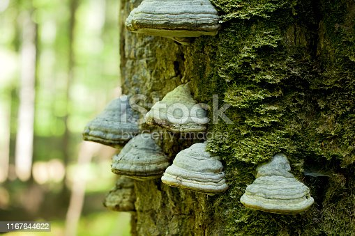 a  mossy trunk of a tree full of mushrooms on the bark in an intense midday light