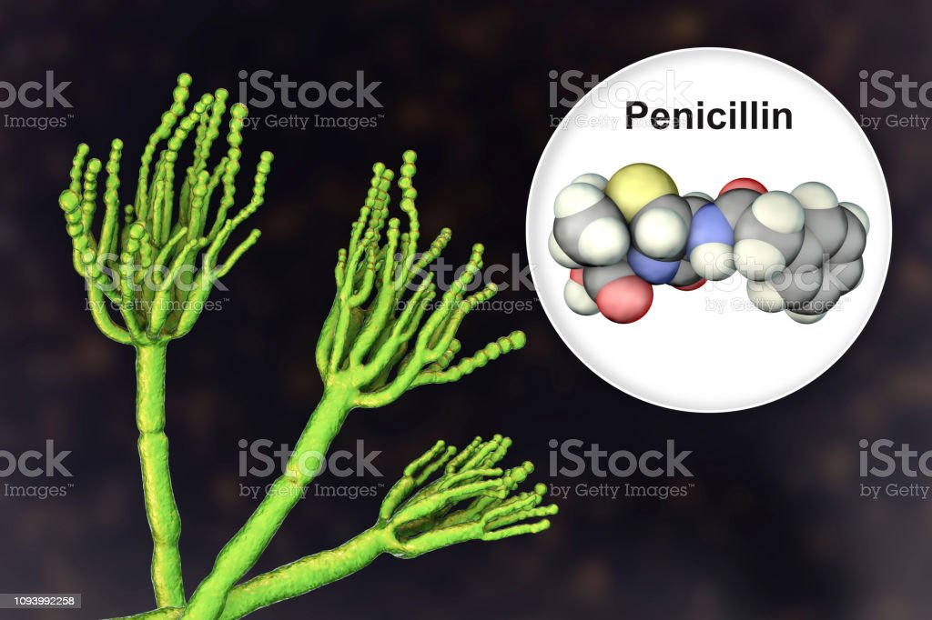 antibiótico y hongos