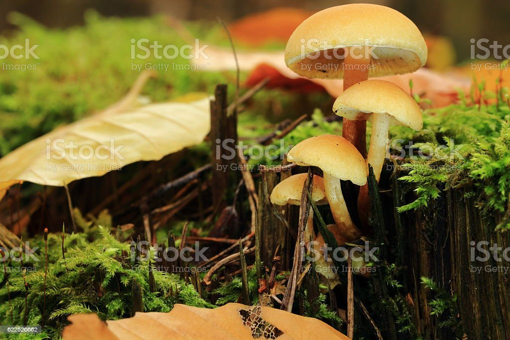 Pilze stock photo