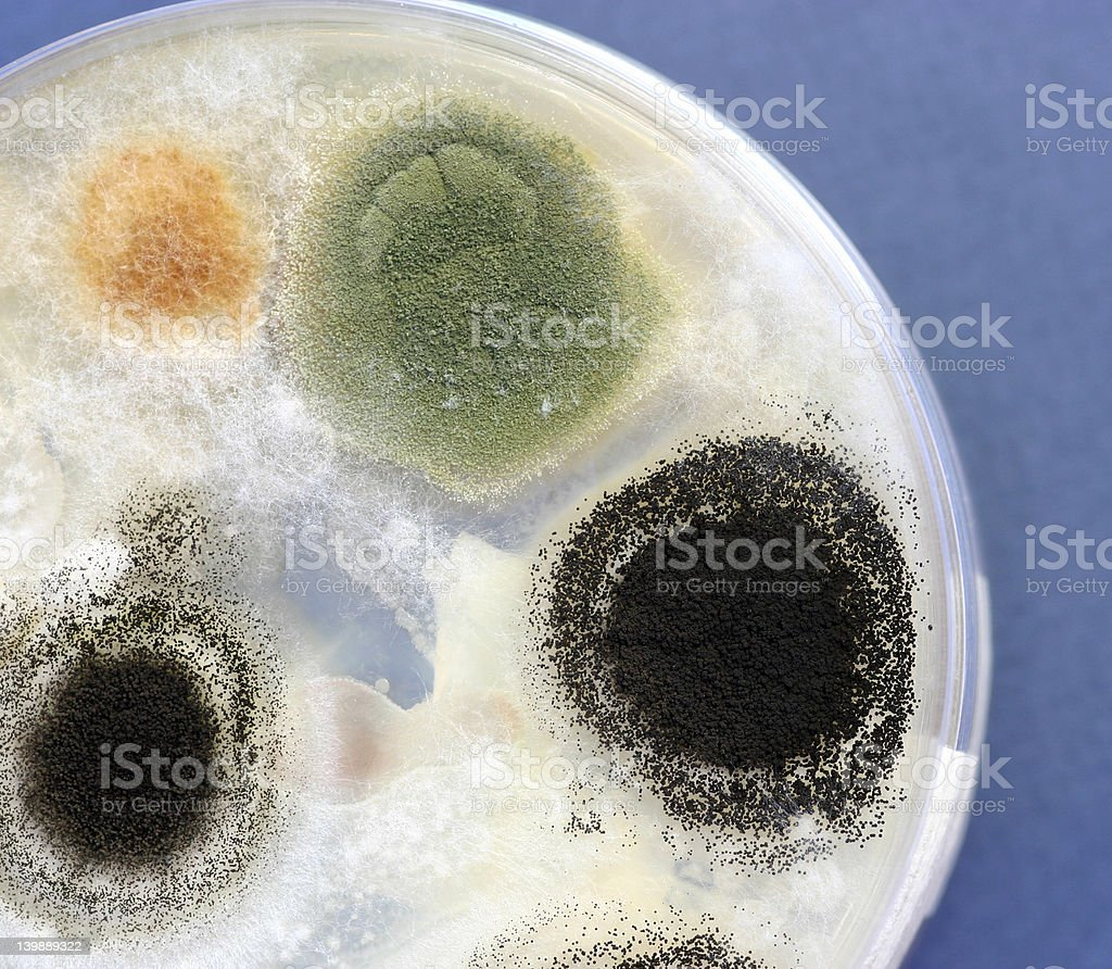 fungus culture royalty-free stock photo