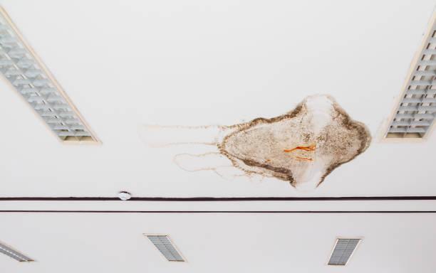 fungo no teto de gesso edifício interior danificado a partir de vazamento de água - moldando - fotografias e filmes do acervo