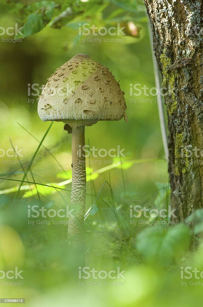 Fungus in the forest royalty-free stock photo