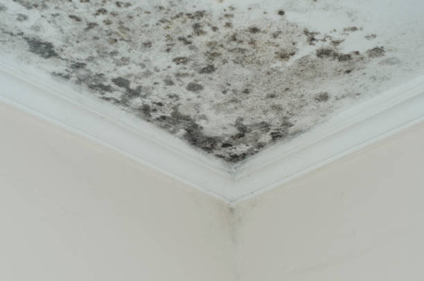 schimmel schimmel close-up dak hoek vochtige - schimmel stockfoto's en -beelden