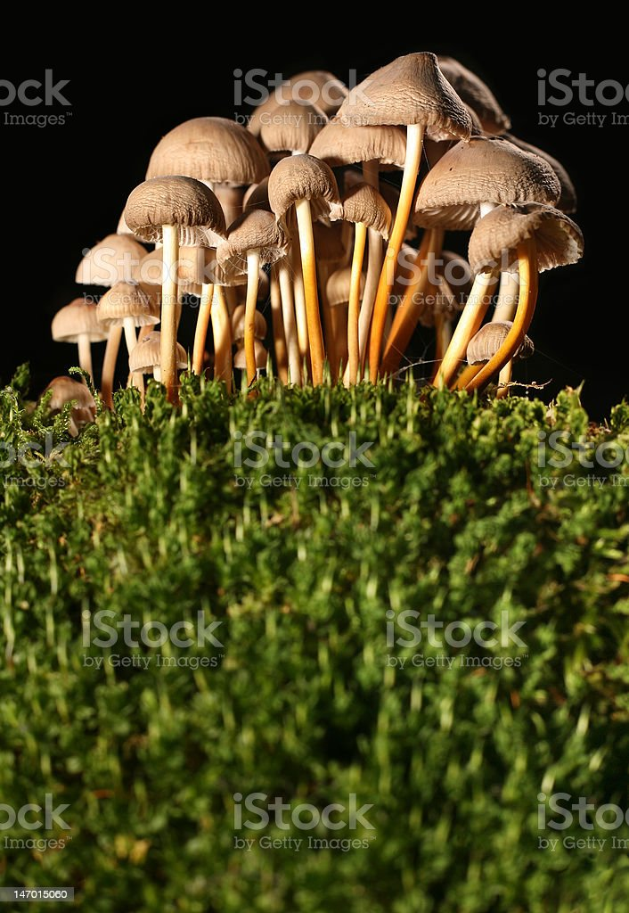 Fungus on moss royalty-free stock photo