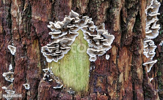 Fungus on the outside of a tree in the winter in the netherlands