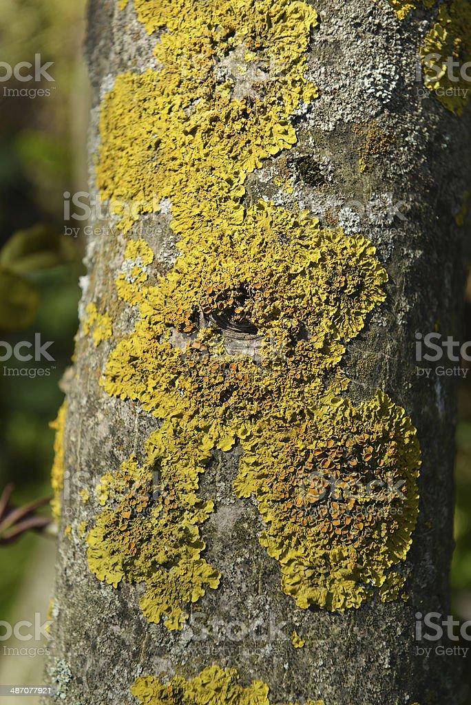 fungus royalty-free stock photo