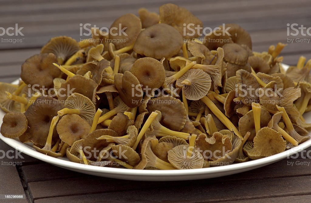 Funnel Chanterelle on a plate stock photo