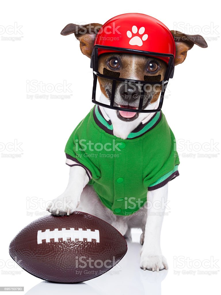 Funny American Football Rugby Dog Stock Photo   More Pictures of ... 961e4978d