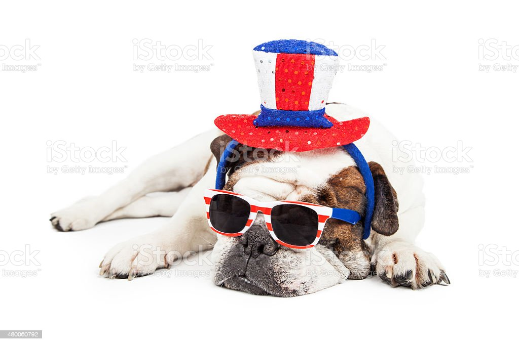 Funny American Holiday Bulldog stock photo