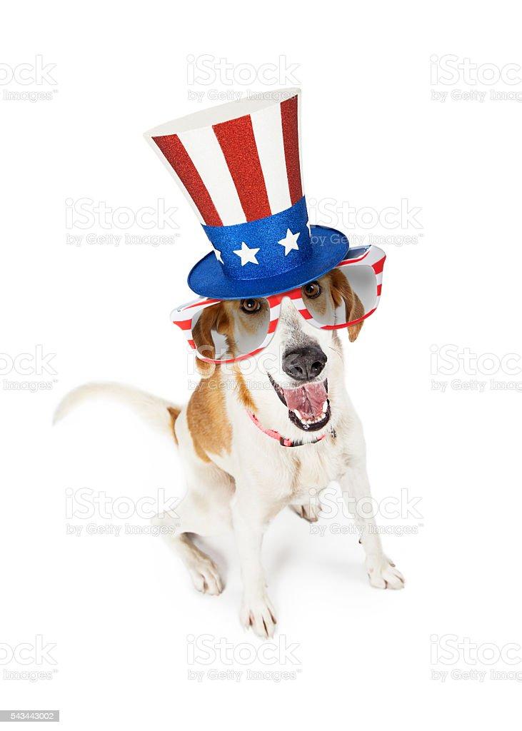 Funny American Patriotic Dog stock photo