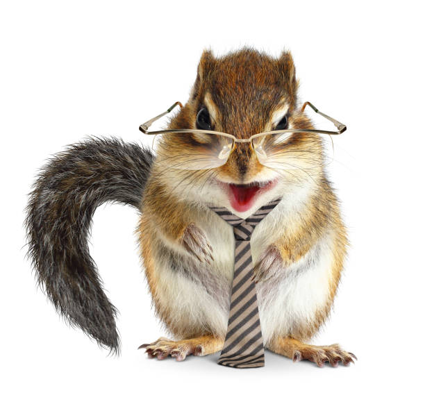 Funny animal businessman, chipmunk with tie and glasses on white stock photo