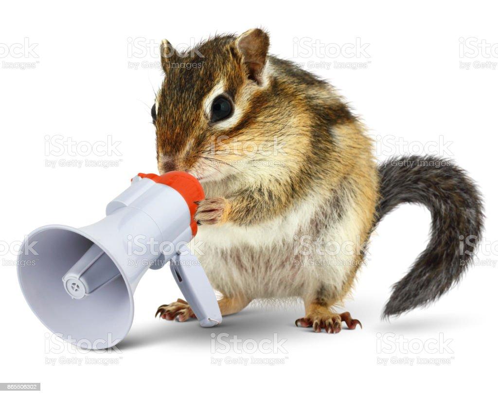 Funny animal chipmunk talking into megaphone, isolated on white stock photo
